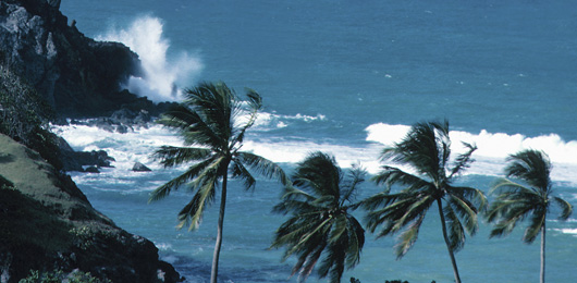 Un an après le tsunami, la menace persiste