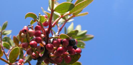Vous devriez connaître ces plantes: elles peuvent empoisonner vos pique-niques
