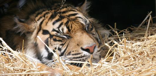 Comment les zoos sont devenus moins cruels pour les animaux