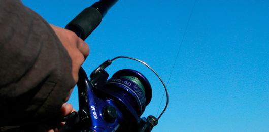 Ces lâchers clandestins de poissons qui malmènent nos lacs