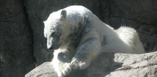 Comnment oublier ses préjugés sur les parcs animaliers