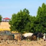Niamey (Niger), Ceinture Verte. Le long de cette dernière cohabitent plusieurs populations. Des villas ont poussé comme des champignons. Elles côtoient parfois des paillotes habitées par des populations temporaires, qui retournent à l'intérieur du pays, dans les villages, à la saison des pluies (juin à septembre). Photo Maurice Ascani