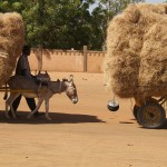 Niamey (Niger), Ceinture Verte. Photo Maurice Ascani