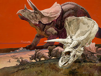Tricératops Illustration parue en été 1978 dans le National Geographic. © Roy Andersen/National Geographic Creative
