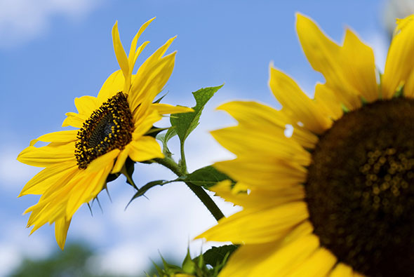 Une plante est capable de faire la distinction entre le passage d'un nuage et l'ombre qui lui vient d'une voisine. © Thinkstock