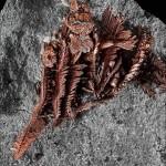 Bel exemple de cuivre natif du Kazakhstan. Photos © Stefan Ansermet / Musée cantonal de géologie