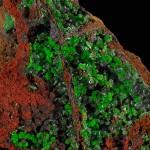 Trouvée en Grèce, cette conichalcite d'un vert vénéneux contient de l'arsenic. Photos © Stefan Ansermet / Musée cantonal de géologie