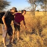 Olivier Glaizot (à g.) et Laurent Keller inspectent une jeune termitière. Pour créer cette structure, les insectes récoltent de la terre qu'ils mélangent avec leur salive pour obtenir une pâte très dure. Photo Philippe Christe