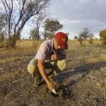 Laurent Keller, spécialiste des insectes sociaux, s'intéresse au fonctionnement d'une jeune termitière. La majeure partie de la colonie, notamment la reine, est enfouie sous terre. Photo Olivier Glaizot