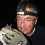 Ce nyctère de la Thébaïde, choyé par le professeur Philippe Christe, était parasité par des trypanosomes. Ces organismes unicellulaires vivent dans le sang des chauves-souris et sont responsables de la maladie du sommeil. Photo Michel Genoud