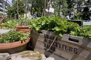 Urban Agriculture Basel