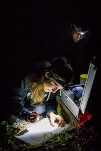 Biologists taking notes on the Daubenton's bats
