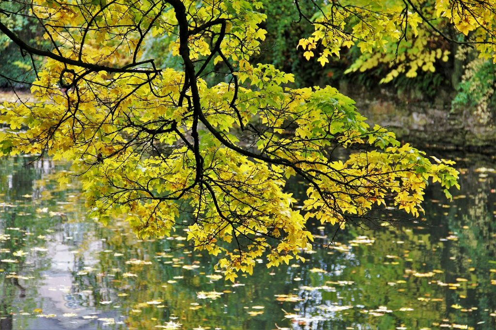 Golden October Autumn Idyll